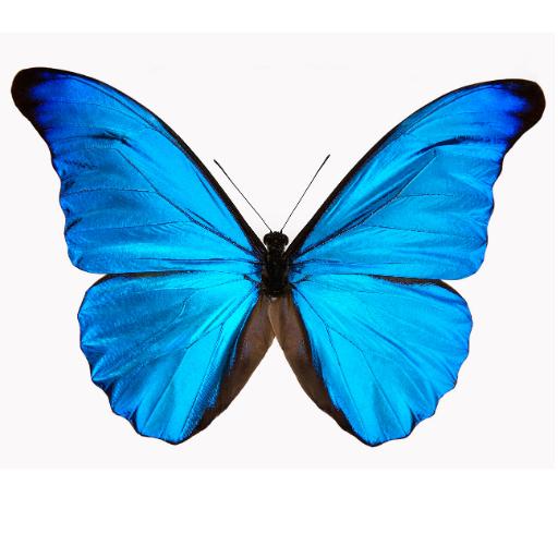 Ballen Butterfly S